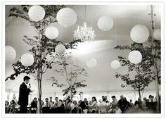 trees & lanterns