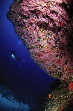 Deep sea diving in Bouches du Rhone Marseille, France