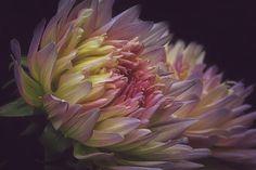 """Midnight Blooms"" http://fineartamerica.com/featured/midnight-blooms-tammy-garner.html"