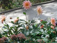 A garden with a fresh, new outlook | FineGardening