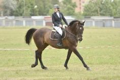 Do you know what I love? How much developing OUR fitness and developing the fitness of our HORSES follows the same path!