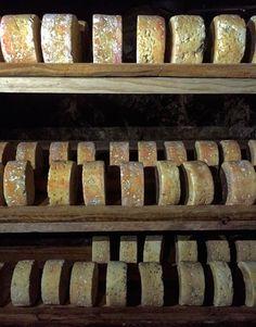 Quesos El Cabriteru madurando en cueva. Las especiales corrientes de aire de las cuevas de Cabrales hacen que el hongo Penicillium se desarrolle en el queso inundándolo de esporas.