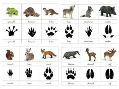 Empreintes animaux de la forêt animals silly animals animal mashups animal printables majestic animals animals and pets funny hilarious animal Animal Activities, Montessori Activities, Preschool Activities, Animal Footprints, Fun Facts About Animals, Animal Tracks, Forest School, Montessori Materials, Preschool Science