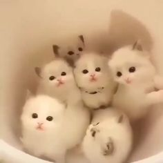 6 Very Beautiful Kittens Family Everyone Desire - Funny Animals Baby Animals Super Cute, Cute Baby Cats, Cute Little Animals, Cute Cats And Kittens, Cute Funny Animals, Cute Dogs, Fluffy Kittens, Funny Cats, Cute Animal Videos