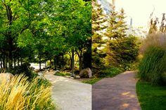 Toronto Music Garden – Landscape Voice