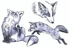 Fox and platinum fox sketches by *silvercrossfox on deviantART,,Tutorial_Foxes_by_modesty., How to draw Animals, tutorials for drawing animals, animal anatomy, animal sketches, cute, kawaii, realistic, animals , how to draw a fox, fox, fence fox reference , paw, sketchbook art teacher, art lesson , sketching