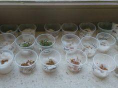 3de kleuterklas: Thema: Zaaien en planten