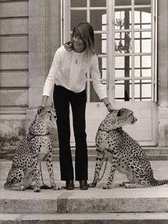 cat ladies / starbucks and jane austen