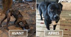 Avant/Après : enchaîné depuis 4 ans, ce chien mourait… puis il a trouvé une famille qui l'a transformé