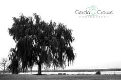 Black&White, Big tree Big Tree, Black And White, Beach, Water, Photography, Outdoor, Gripe Water, Outdoors, Blanco Y Negro