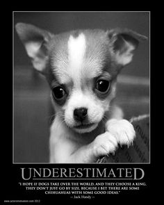 I bet there are some chihuahuas with some good ideas -Jack Handy