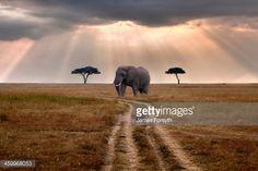 Stock-Foto : Road through Mara