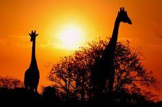 Villahermosa, Tabasco. El parque zoológico Yumka, se prepara para su vigésimo aniversario el próximo mes de Marzo. El centro de interpretación a la naturaleza es visitado anualmente por cerca de 30 mil turistas nacionales y extranjeros. Notimex/Luis López