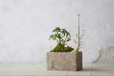 日々育ってゆく植物をうらやましく思い,ついに見よう見真似で自ら成長をはじめたプランター(けど少し間違っている)(square)