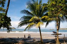 manuel antonio beach palms   - Costa Rica