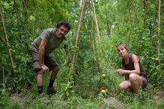 Dans le Gard, Denis Florès fait le pari de l'agroforesterie - Ministère de l'agriculture, de l'agroalimentaire et de la forêt