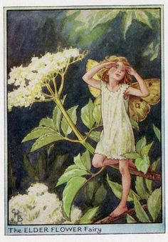 Elder Flower Fairy.