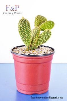 Cactus Plants, Planter Pots, Cacti, Cactus