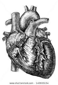 human heart art projects - Google Search