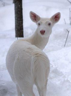 white in nature