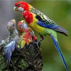 Parrot family in the wild. I Love birds so much l can't stand to see them in captivity. Pretty Birds, Beautiful Birds, Animals Beautiful, Animals And Pets, Baby Animals, Cute Animals, Exotic Birds, Colorful Birds, All Birds