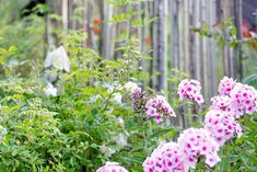 Sichtschutz oder unkonventionelle Rankhilfe DIY • Pomponetti Clematis, Garden Deco, Ivy Leaf, Rustic Gardens, Fence, Bloom, Flowers, Plants, Inspiration