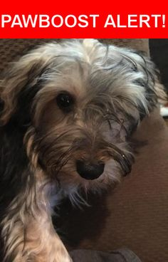 Is this your lost pet? Found in Dalzell, SC 29040. Please spread the word so we can find the owner!  Silkie yorkie.   Nearest Address: Near Peach Orchard Rd & Prairie Rd