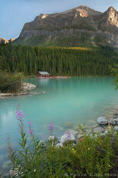Lake Louise - summer flowers by *La-Vita-a-Bella