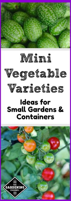 Are you limited on gardening space? Try these growing ideas for mini varieties for small gardens and containers.