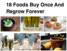 With the increasing price of grocery items, the living cost goes up. But there are some easy ways that we can save some time. Do you know everyday we throw some of scraps out which could actually be used to regrow? Bok Choy and green onion are easy to grow from leftover scraps. This way