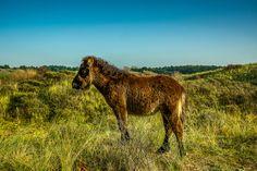 Shetlandsponny in the right environment by Kim von Essen on 500px