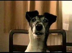 Olvi mainos- Häntä - YouTube Beer, Dogs, Youtube, Animals, Root Beer, Ale, Animales, Animaux, Pet Dogs