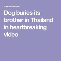 Dog buries its brother in Thailand in heartbreaking video