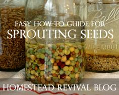Homestead Revival: Sprouting Edible Seeds