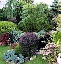 Декоративные растения для сада описания фото