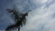 Céu Craquelado - Vinhedo/SP - agosto/2015 - Por Inês de Barros - Ouvi dizer que quando o céu está assim é sinal de que vai esfriar...