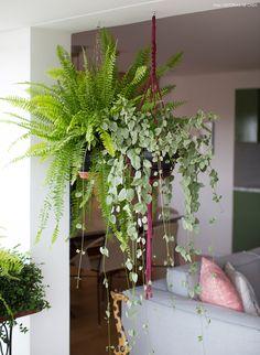 sala de estar com varanda integrada e divisória feita com plantas pendentes no macramê