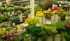 """The nation's largest flower market. """"Brilliantly displayed within the walls of The Original Los Angeles Floor Market's massive, 50,000 sq. ft., solar-powered marketplace you'll find the world's finest and freshest floral offerings."""""""