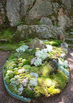 Miniature moss garden.