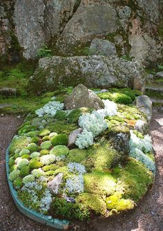 Moss Garden. I don't know why, but I love moss. I wish I could find this and try to grow it. I haven't seen moss since I was a little girl growing up in Louisiana.