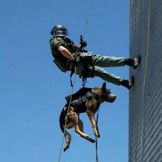 Service Dog Submissive See Police Dog