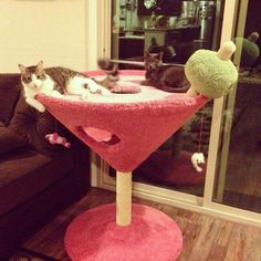 Martini scratching post/play hut for cats!! Omg, and it's deliciously bubble gum pink... and green!! My baby boy might be too masculine for this, lol.