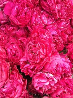All pink floral peonies, all the time. My Flower, Pretty In Pink, Pink Flowers, Beautiful Flowers, Bright Flowers, Beautiful Gorgeous, Fresh Flowers, Red Roses, Tout Rose