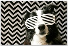 5 Fun & Easy Home Pet Photography Ideas | Pretty Fluffy 5