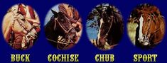 Buck, Cochise, Chub and Sport!  The horses of Bonanza.  Ben/Buck; Little Joe/Cochise; Hoss/Chub; and Adam/Sport.