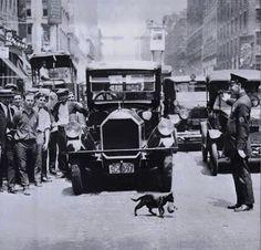 Julio,1925, ciudad de Nueva York. Un policía detiene el tráfico para que una gata madre que llevaba su gatito, pueda cruzar una calle muy transitada.