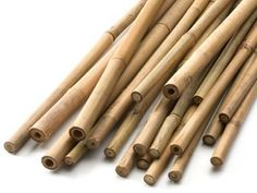 Bamboo Cane Supports for Climbing Plants https://www.quickcrop.co.uk/product/6ft-bamboo-cane-8-packs #bamboo #cane #support #allotment