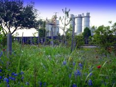 Old Rice dryer in Katy Texas, with blue bonnets in foreground, the Texas state flower
