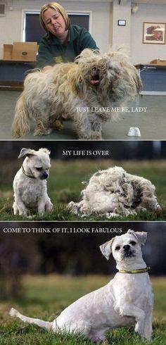 Shaggy Dog Gets Groomed, Looks Fabulous!