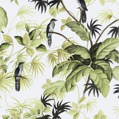 P&S International P+S International Tropical Exotic Birds Trees Leaves Wallpaper 05550-20